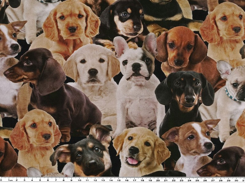 lustige Hunde hellblau Baumwoll-Popeline Digitaldruck
